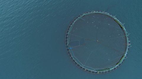 AERIAL, TOP DOWN, COPY SPACE: Flying above a cage full of salmon in the sea near the scenic Faroe Islands. Circle in the middle of the tranquil blue ocean filled with fish. Scandinavian fish farm.