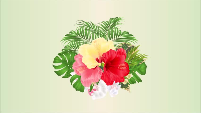 Yellow Hibiscus Drawing Stock Video Footage 4k And Hd Video Clips