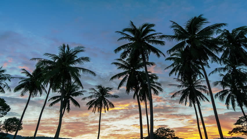 Spectacular sunset over palm trees on a tropical island. 4k time lapse
