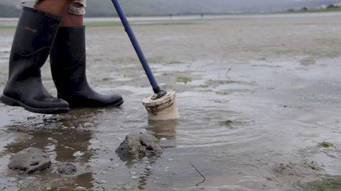 Mud prawn pump for fishing in Knysna, South Africa