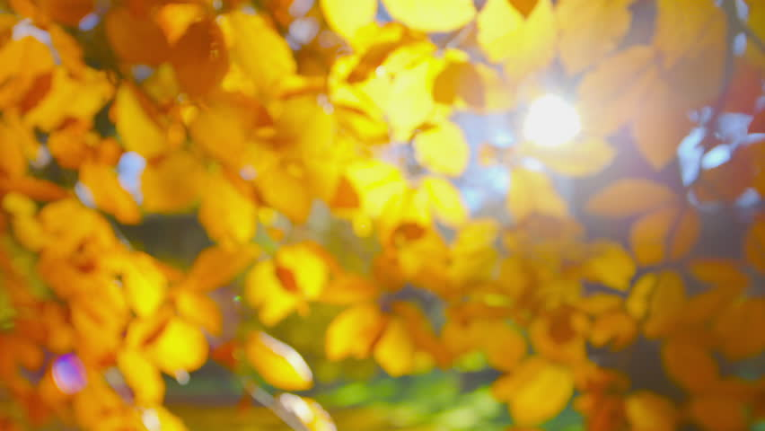 Autumn Impressions - Sequence of different completely defocused autumn foliage backgrounds - ProRes | Shutterstock HD Video #1015645564