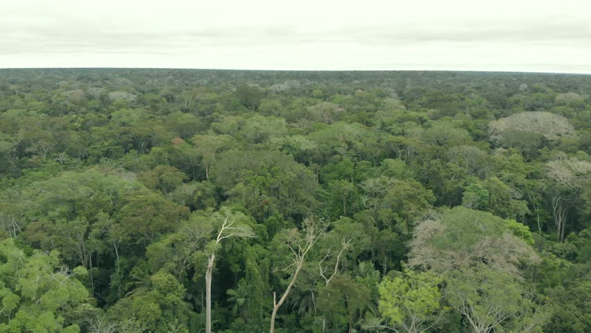 Aerial cinematic view of Amazon rain forest jungle and river. Puerto Maldonado Peru. Drone rising up filming horizon above trees and water shore line during cloudy day.