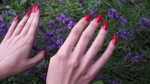 Female hands with very long natural red nails and lavender flowers