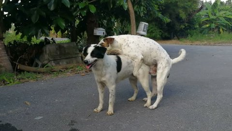 Mating of dog.