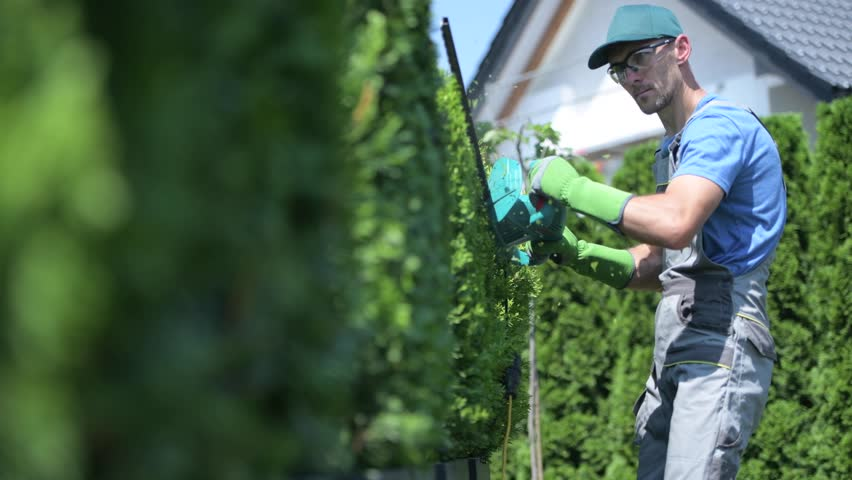 Gardener in His 30s Trimming Thujas Using Electric Trimmer | Shutterstock HD Video #1015850704
