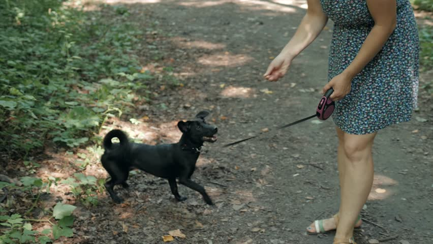 Puppy and black dog and master walk with a leash, professional walker in park or forest, dog walking