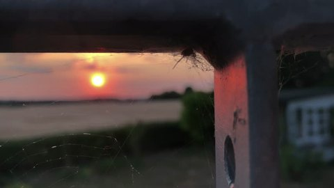 Sunset over feald seen thru spiderweb