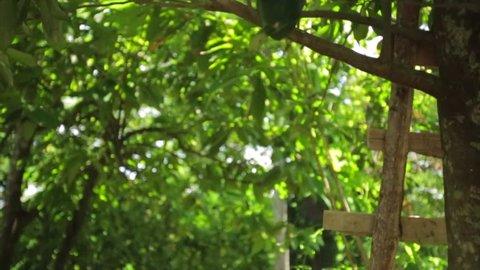 Yaca fruit at comalcalco tabasco