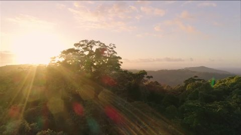 A Drone / Aerial Shot Over A Tropical Rainforest Canopy At Sunrise (Mary Cairncross, Queensland. Australia) In 4K