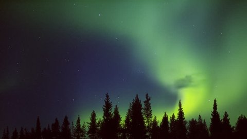 yellow green midnight aurora over the forest