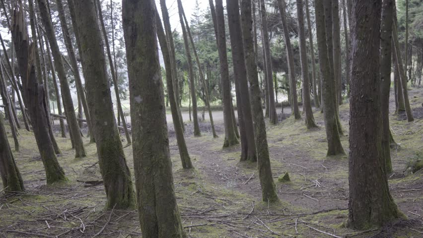Scary forest accompanied by intrigue and suspense   Shutterstock HD Video #1016776264