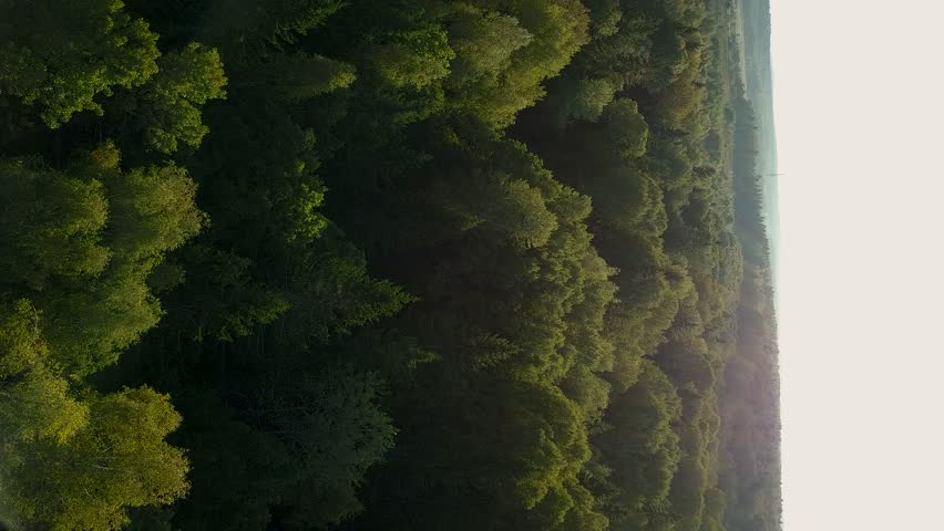 Forest View From The Sky. Top view: Flying Over a Tree In The Autumn Aerial Shot. 4K  Drone Footage Of Yellow color. Vertical video for smartphones. Wallpaper. | Shutterstock HD Video #1016823064