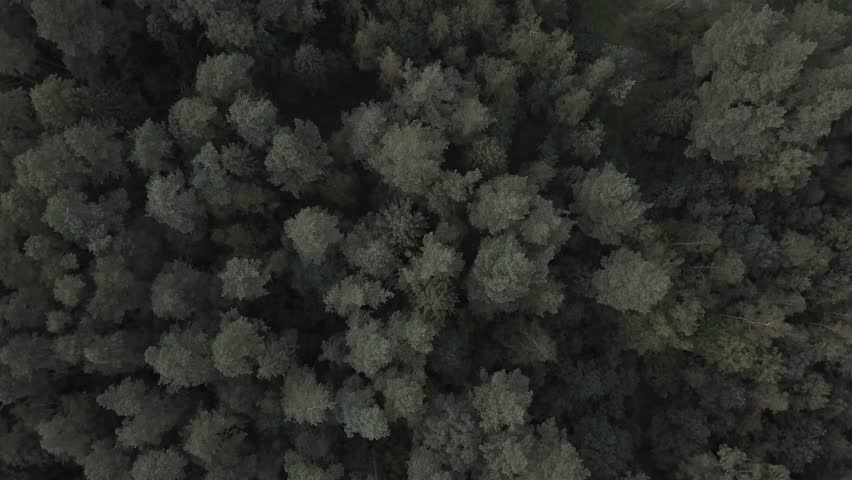 4k AERIAL: Top down view on European mixed forest in autumnal colors. 3840x2160, 30fps. | Shutterstock HD Video #1016938564