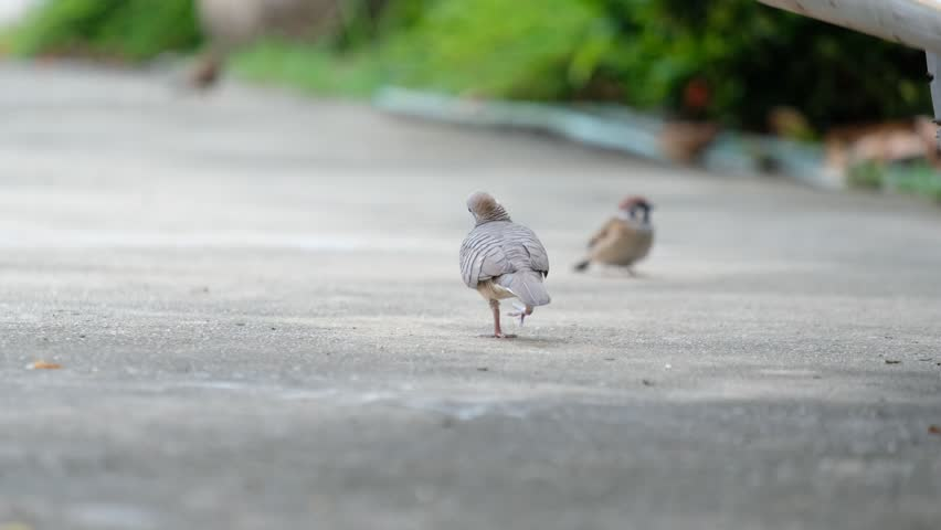 Birds feed on the ground. | Shutterstock HD Video #1016941324