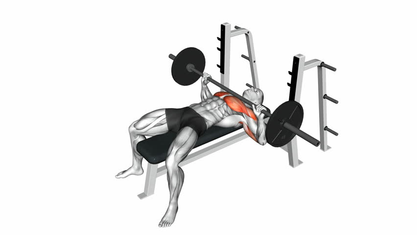 Barbell Bench Press Exercise Anatomy Stock Footage Video 100
