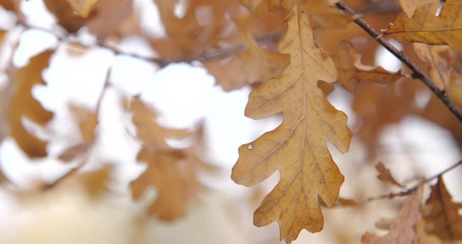 Autumn leaves and trees.Slow motion. | Shutterstock HD Video #1017420874