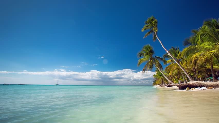 Palm trees on luxury exotic beach