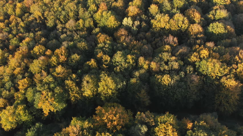 AERIAL TOP DOWN: Flying above a stunning colorful treetops with turning leaves on sunny day. Beautiful autumn trees in yellow, orange and red forest on sunny autumn day. Fall foliage in autumn forest