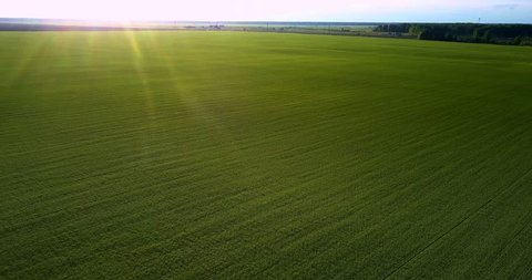 amazing aerial view sunset rays light pictorial boundless green field extending to horizon in summer evening