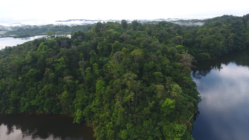 Primary rainforest along a man made lake in Guiana. Aerial drone shot