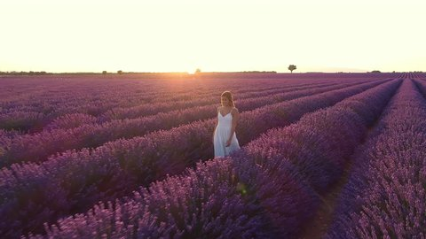 Aerial - Beautiful young woman in a white dress walking through purple lavender field at sunset