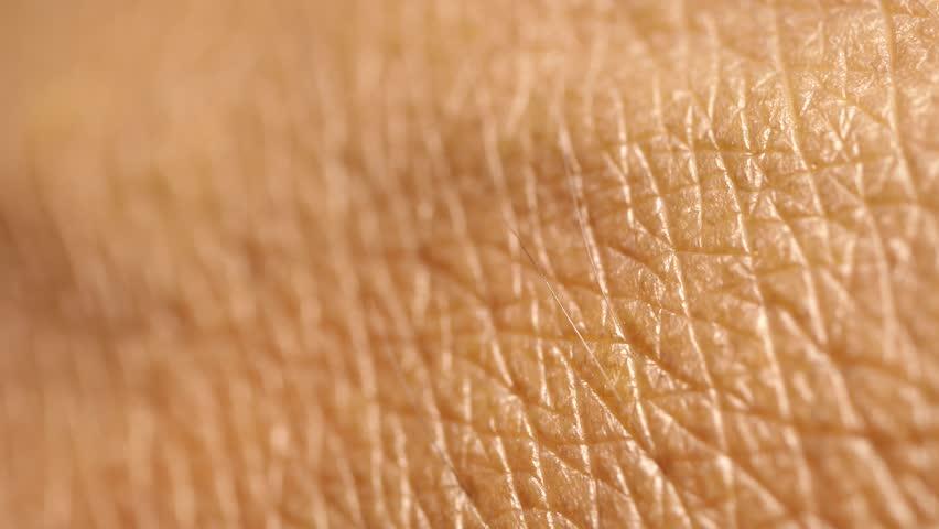 Close up of Human Skin Texture   Shutterstock HD Video #1018810234