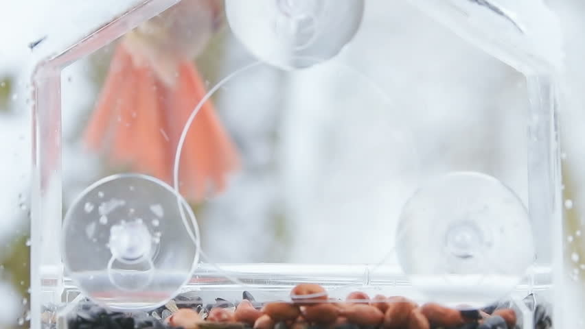 Slow motion of scared red female northern cardinal hovering near plastic window bird feeder perch, flying away, sunflower seeds, peanuts, snow, snowing, winter snowstorm in Virginia   Shutterstock HD Video #1019799724