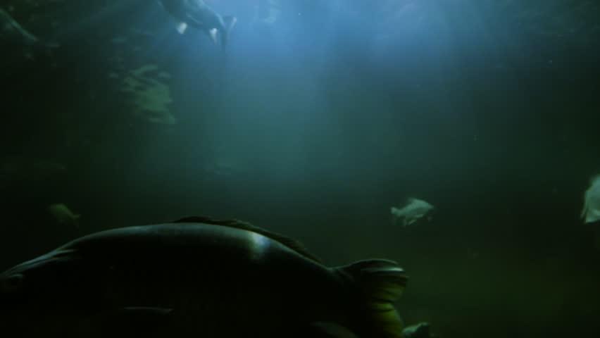 Fish inside big aquarium 4K Resolution
