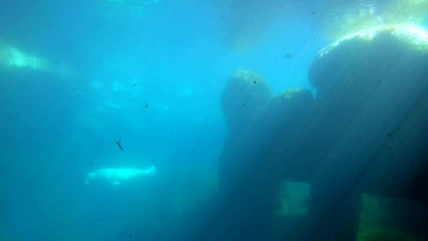 Swimming dirty ocean water Footage | Stock Clips