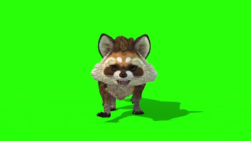 Raccoon Animal Walkcycle Loop Front Stock Footage Video (100% Royalty-free)  1020022114   Shutterstock