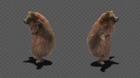 bear CG fur 3d rendering animal realistic CGI VFX Animation  Loop alpha dance composition 3d mapping