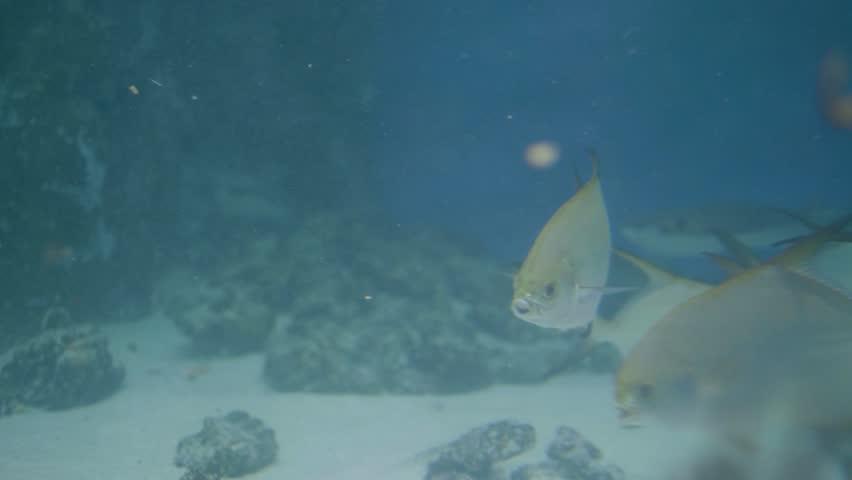Fish swimming in undersea world oceanarium. Fish in transparent water aquarium   Shutterstock HD Video #1020586054