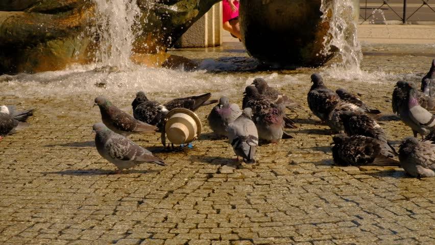 City pigeons bathing in park fountain | Shutterstock HD Video #1020663094