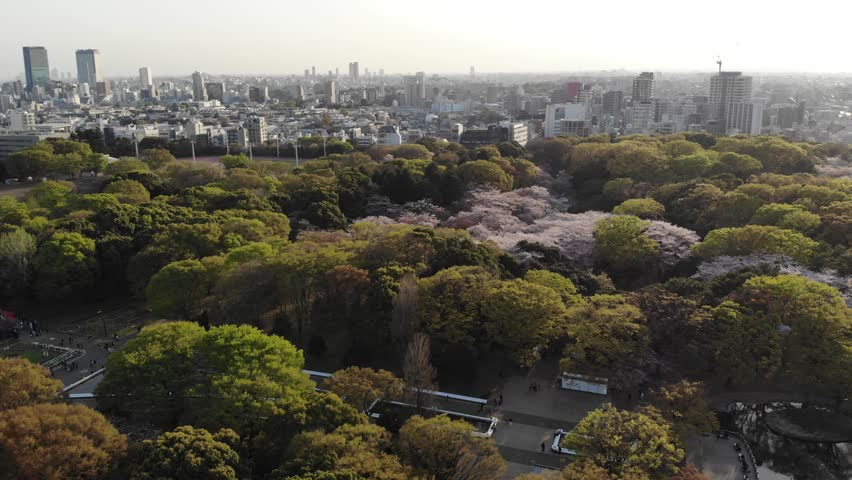 Drone footage of Tokyo's Yoyogi and Ueno Parks during Sakura cherry blossom season | Shutterstock HD Video #1020944704