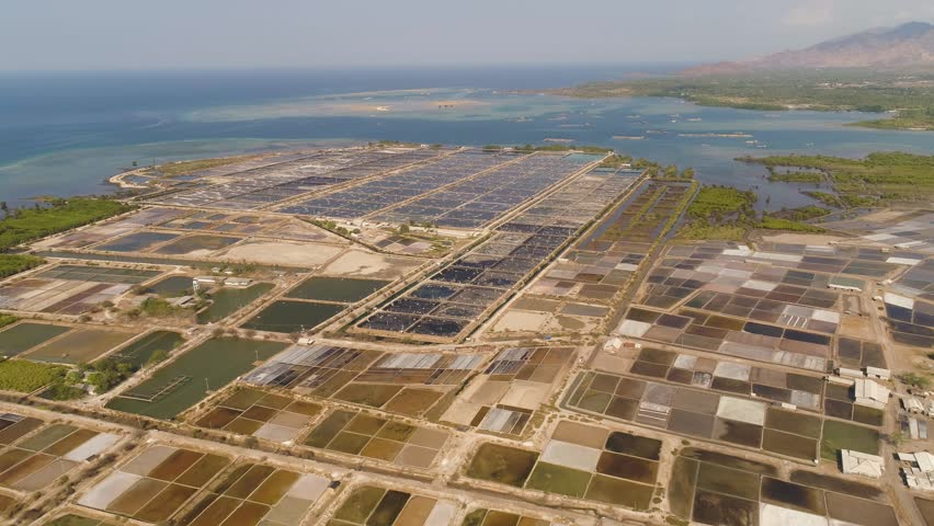 Shrimp Farm, Prawn Farming with Stock Footage Video (100% Royalty-free)  1021488844 | Shutterstock