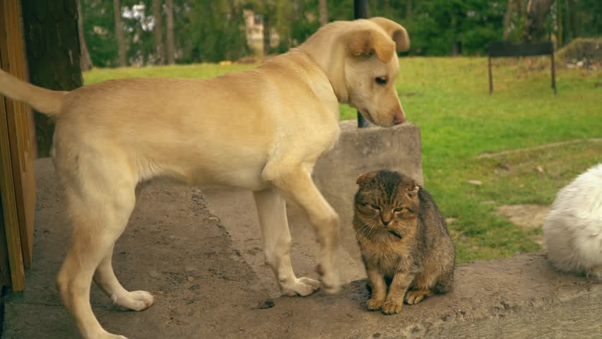 Dog Playing With A Cat Stock Footage Video 100 Royalty Free