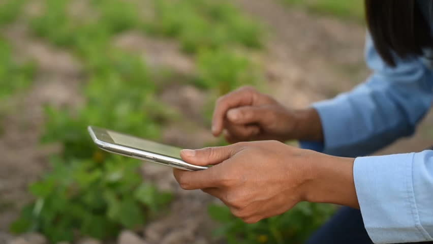 Asian young female farmer using tablet on her agricultural field in Thailand. Farmer at sunset in a field with a tablet computer. | Shutterstock HD Video #1021778944