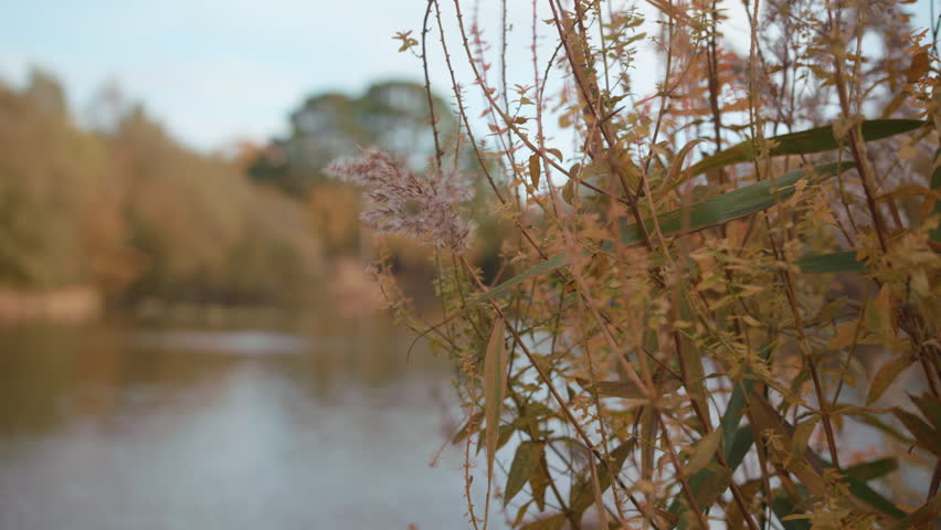 Rack Focus between Bushes And A Lack / Pond At Autumn / Fall, In Slow Motion | Shutterstock HD Video #1022114374