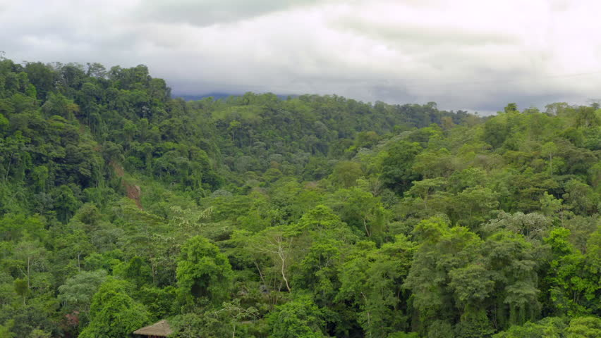 Aerial: Lush Green Exotic Jungle Under Cloudy Sky | Shutterstock HD Video #1022465164