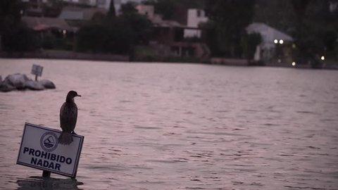 Birds on lake in Lima, Peru