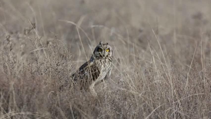 Owl hunting in the garden   Shutterstock HD Video #1022654734