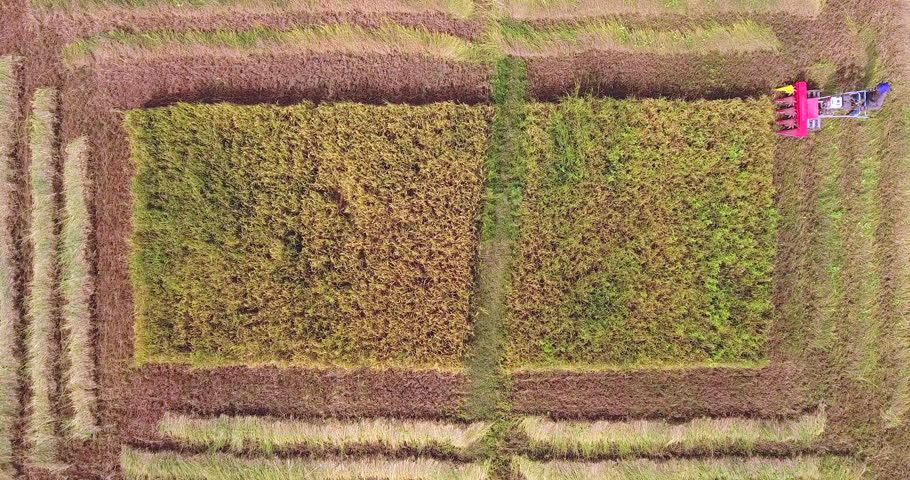 Overhead aerial view of a farmer harvesting rice crops using a machine | Shutterstock HD Video #1022841334