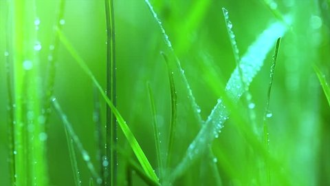 Grass with dew drops. Blurred Grass Background With Water Drops closeup. Nature. Green Spring Environment concept. Slow motion 240 fps. 4K UHD video