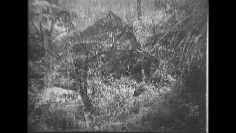 CIRCA 1949 - Malayan villagers construct a foot bridge in the jungle.