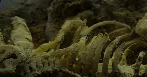 Abstract macro composition. Excavating bones dinosaur in the sand, Skeleton and archaeological find. 4k.