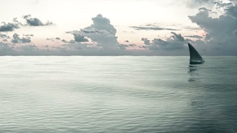 4K Animation of Shark Fin in the Sea at Sunset