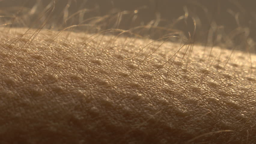 Goosebumps close up. Hair on the hand stand up and falls. Skin reaction to cold, fear, or good music. Horripilation on skin.