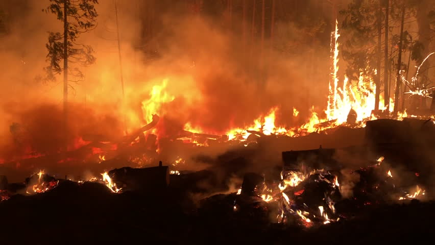Wide Angle: Trees Going Up in Flames in a Forest Fire #1024601594