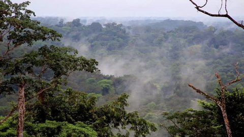 The evaporation of moisture in the rainforest of Africa. Fog over the tropical jungles of Africa. Equatorial Guinea. / Beautiful landscape. The evaporation of moisture in the rainforest of Africa