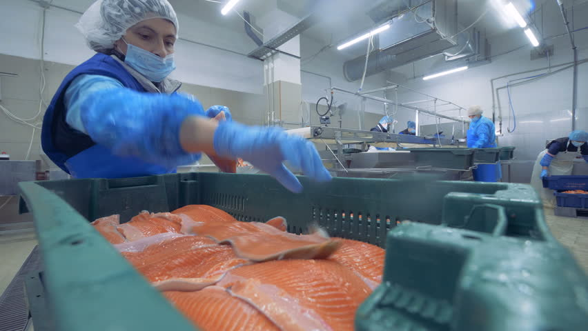 Fish fillets are getting relocated into the container by the worker | Shutterstock HD Video #1025390684